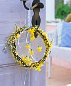 Wreath of broom and narcissi