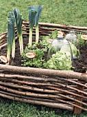 Gemüse und Salat im Hochbeet