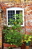 A window of an English country house