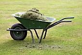 Grass cuttings in a wheelbarrow