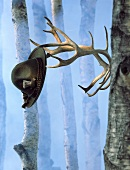 A hat hanging on a pair of antlers