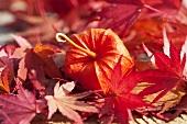 Lampionblume und Ahornblätter