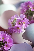 Coloured egg shells with lilac primroses