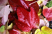 Wet autumnal leaves (close-up)