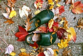 Garden shoes in autumnal leaves, seen from above