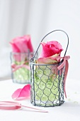 A rose in a wire basket