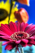 Gerbera, Judenkirsche und Sonnenblume