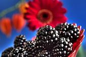 Blackberries in front of gerbera