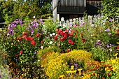 Cottage garden with wooden fence