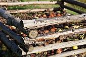 Organic compost in garden (detail)