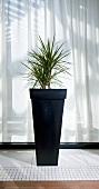 Decorative plant by window