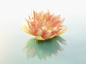 Artificial water lily