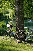 Old bicycle leaning against tree in romantic garden