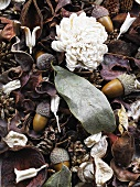 Dried flowers, leaves and acorns