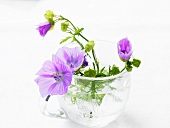 Mallow flowers in water in glass cup