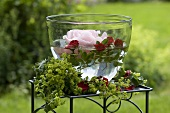 Rose floating candle, roses and lady's mantle