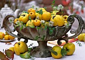 Bowl of quinces, ornamental quinces & clematis seed heads