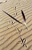 Vogelspuren im Sand