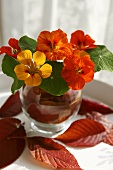 Nasturtiums in a glass vase with autumnal leaves