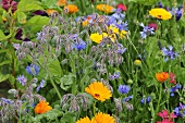 A colourful flowerbed