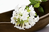 A stem of white phlox lying on a wooden bowl