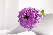 A stem of pale purple phlox lying in a porcelain dish