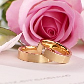 Wedding rings in front of pink rose