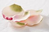 Several pink rose petals