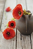 Poppies and jug on wooden background