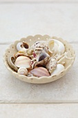 Assorted shells in a dish