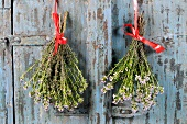 Bunches of thyme hanging up to dry
