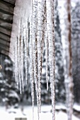 Icicles on a house roof