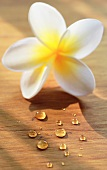 Frangipani flower and drops of water on wooden background