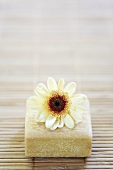 Chrysanthemum flower on a bar of soap