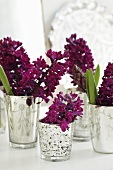 Hyacinths in several silver beakers