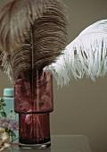 Ostrich feather in vase