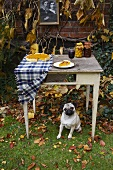 An autumnal table laid with pumpkin pie