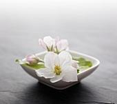 Apple blossom in a finger bowl