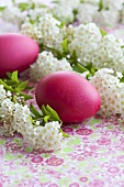 Spiraea with red Easter eggs