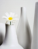 A single marguerite in a white china vase