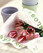 Tulips in a Cloth