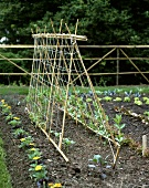 Growing vegetables and flowers with plant supports