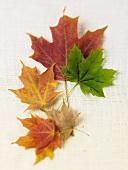 Bunte Ahornblätter auf einem Leinentuch