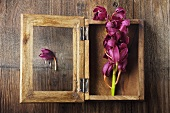 Pink Orchid in Wooden Shadow Box