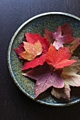 Autumn Leaves in a Pottery Bowl