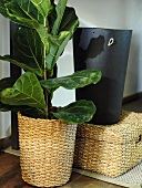 House plants in a pot out of wicker and a black leather waste basket on a basket