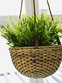 Hanging rattan plant pot with green plants