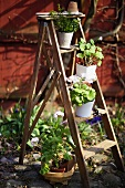 A wooden ladder decorated with flower pots