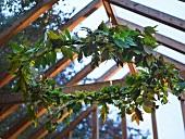 Blätterkranz unterm Glasdach