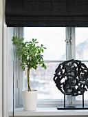 A house plant in a white pot on a window sill with a black blind